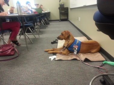 Therapy dog, Jelly, is calming students during their Final Exams